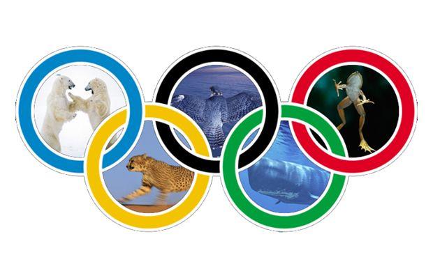 olimpiadi_702818